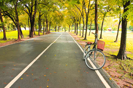The bicycle on path of park photo