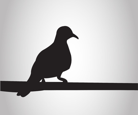 sits: Pigeon sits on a pole silhouettes on the white background