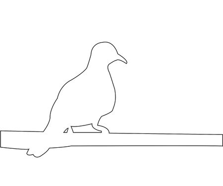 sits: Pigeon sits on a pole path on the white background