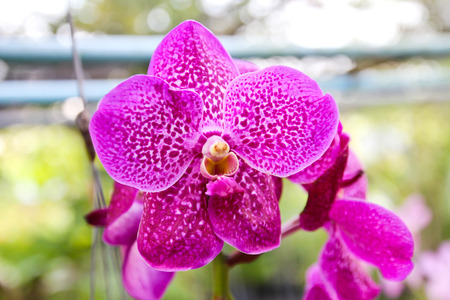 Beautiful violet orchid in garden