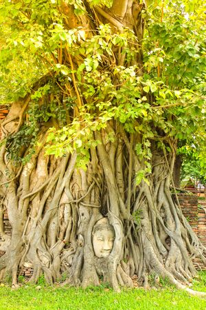 Ancient Buddha head in tree roots at Wat Mahathat in Ayutthaya historical park, Thailand.