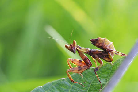 grasshopper in green nature or in the garden  photo