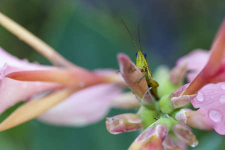 A close up of the grasshopper on flower