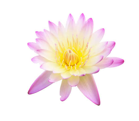 Lotus flower on isolate background Stock Photo