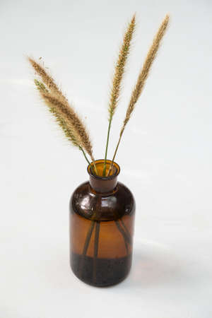 brown bottle: Grass in brown bottle on isolate background