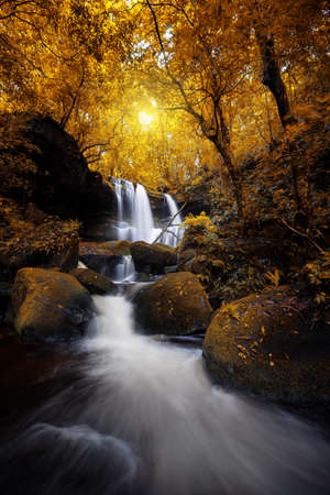 Natural waterfall in deep yellow forest