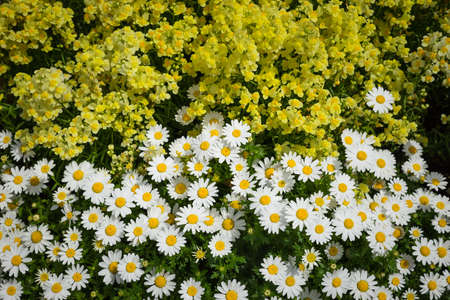White yellow flower texture as background Stock Photo
