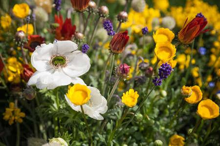 Flower garden as close up