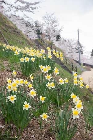 White yellow flower garden Archivio Fotografico