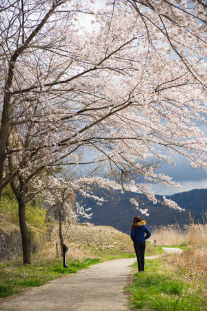 A lonely woman in the sakura tree park