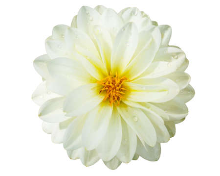 White flower on isolate background