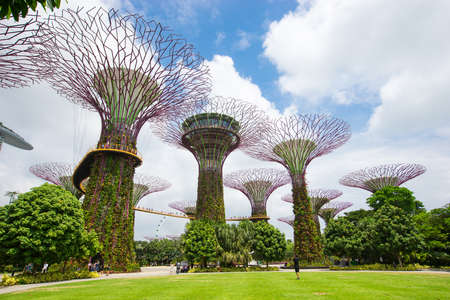 Super tree in the park and blue sky in Singapore