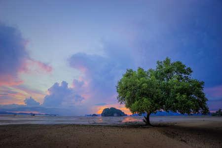 Single tree on beautiful cloud sky