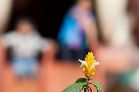 Yellow flower with blurred of kids playing