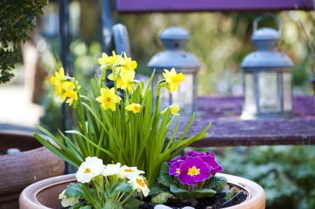 Spring flowers Stock Photo - 13407764