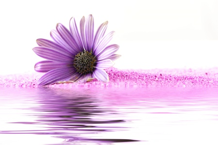Pink blossom 스톡 콘텐츠