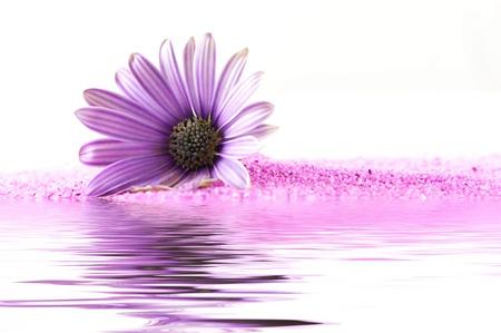homeopatia: Flor rosado