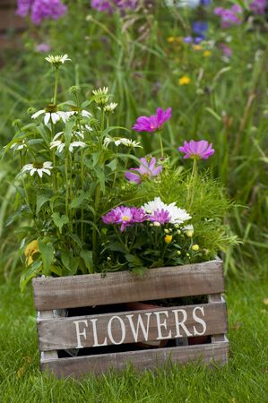 Colorful flowers in wooden box photo
