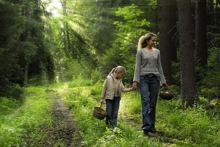 hongo: En el bosque Foto de archivo