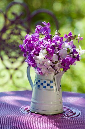 sweet pea flower: Sweet pea flower Stock Photo