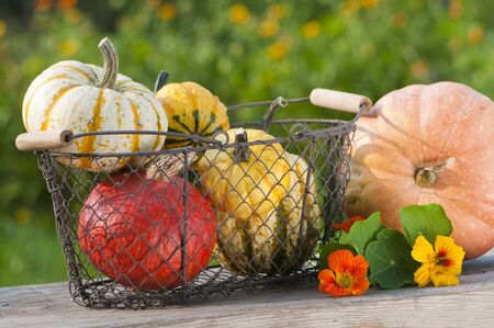 Colorful pumpkins photo