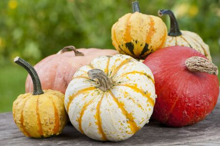 decode: Colorful pumpkins