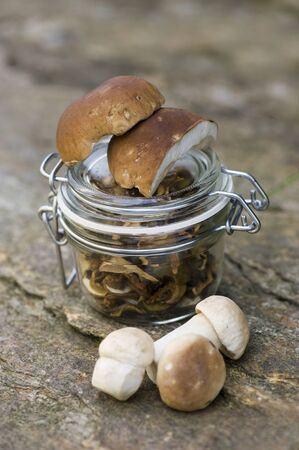 Edible boletus photo