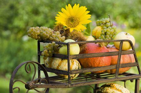 maronite: Thanksgiving