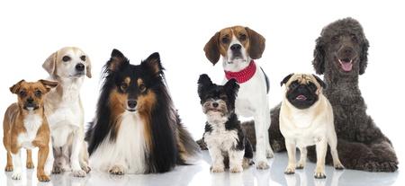 Groep van stamboom en gemengd ras honden Stockfoto