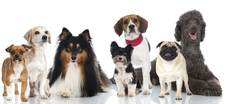 dog sitting: Group of pedigree and mixed breed dogs Stock Photo