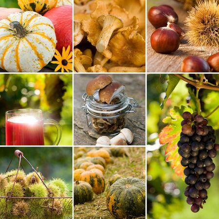 maronite: Autumn collage Stock Photo