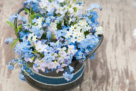 me: Forget me not flowers