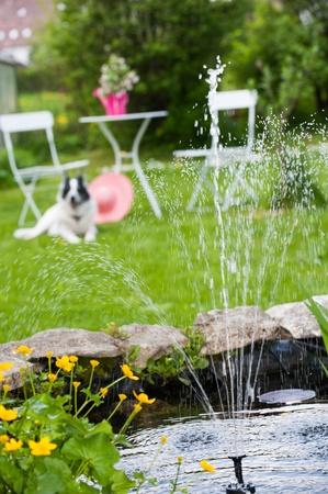 bassin jardin: L'�tang de jardin