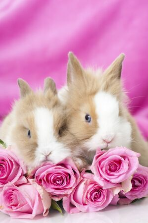 Dwarf rabbits with pink roses photo