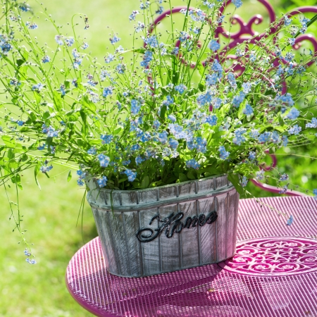 Forget me not flowers in flower pot photo