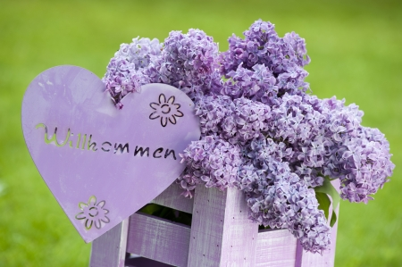 syringa: Purple lilac in a wooden box