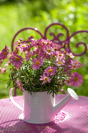 watering can: Pink daisies in a watering can