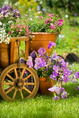 lobelia: Idyllic garden with old wooden cart