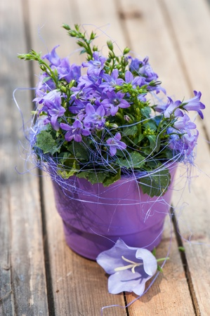little bell: Little bell flower in purple flower pot Stock Photo