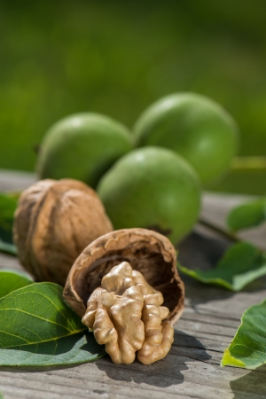 boughs: Walnuts