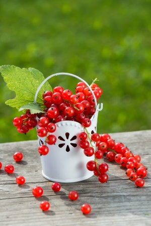 red currants: Red currants in a little basket Stock Photo