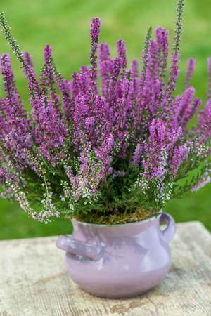 moorland: Moorland herb on wooden background