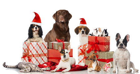 Christmas pets Stock Photo