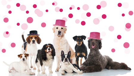 turns of the year: Party dogs Stock Photo