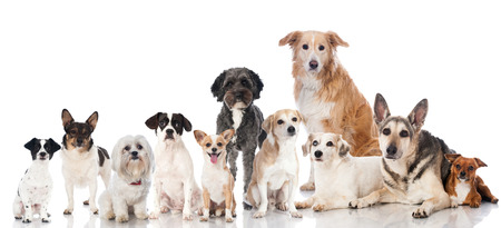 group of dogs: Mixed breed dogs Stock Photo