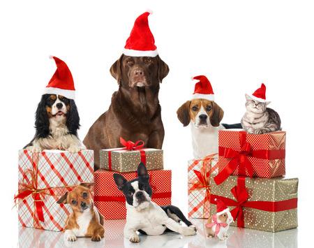 Christmas pets Reklamní fotografie