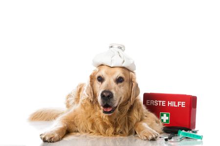 Sick old dog Stock Photo