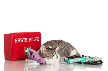 intervention: Young cat with emergency kit