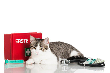 Cat first aid cases