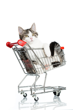 Young cat sitting in a shopping cart photo
